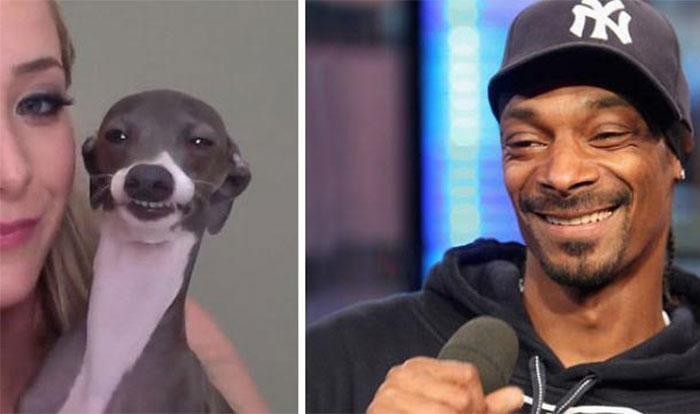 perro snoop