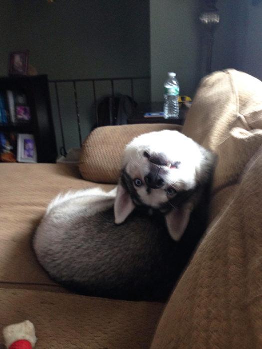 perro roto