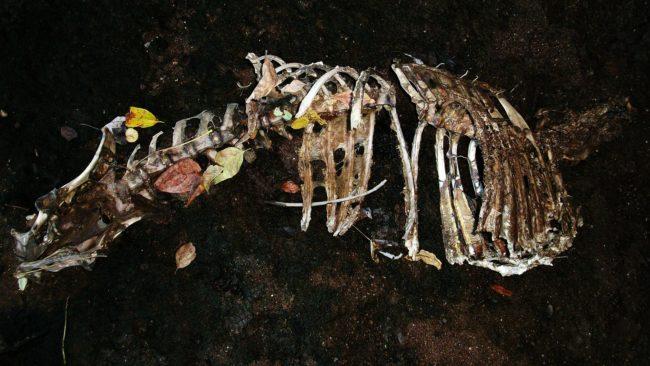 restos de perro