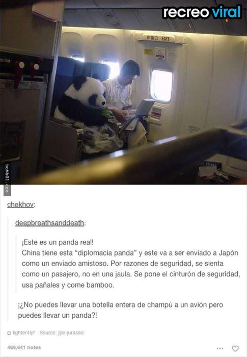 panda viajando en un avión