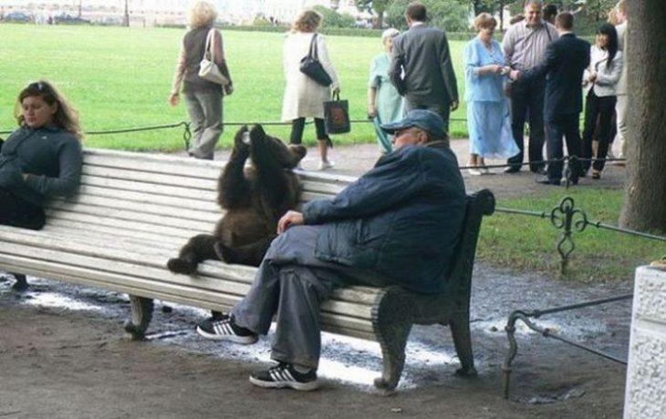 oso tomando en una banca en un parque