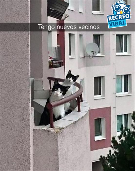 snapchat gatos en un balcón