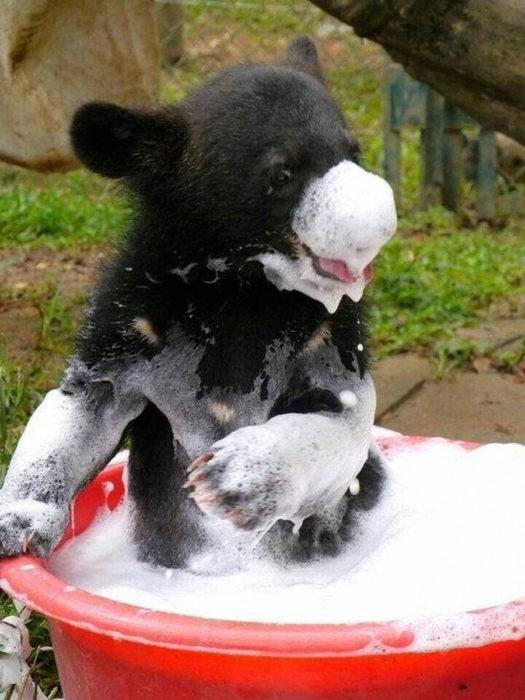 beb de oso lleno de espuma