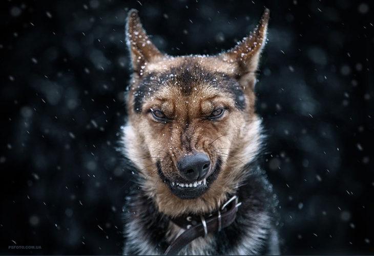 perro gruñiendo
