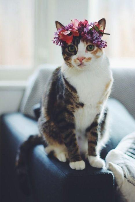 gato con corona de flores
