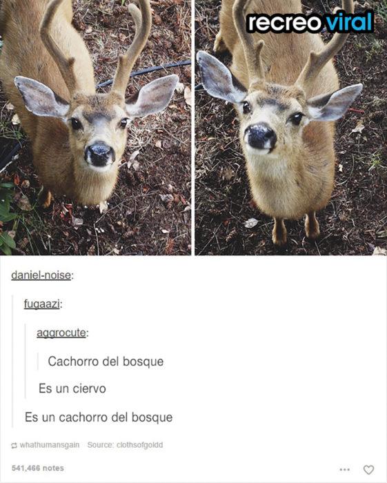ciervo joven