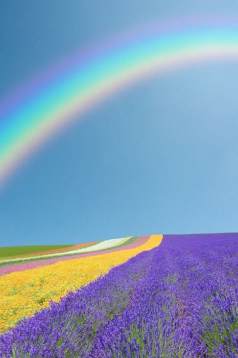 arcoíris sobre campo de flores