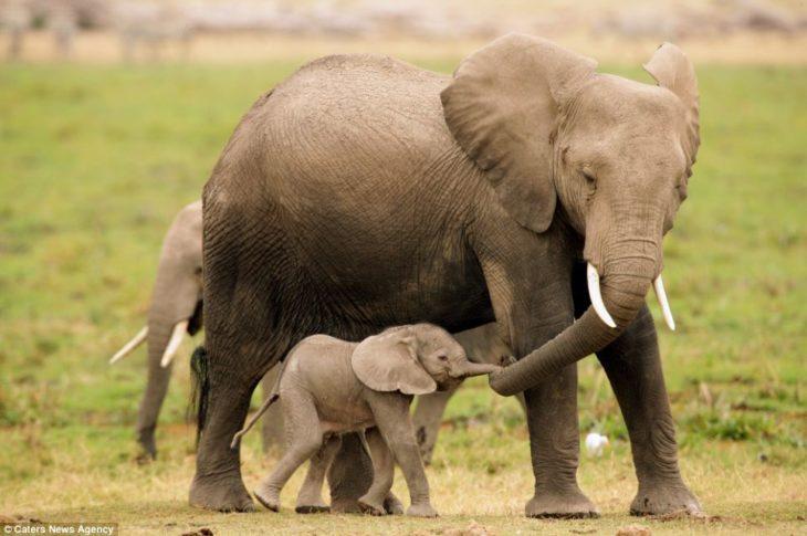 mamá elefante y su cría