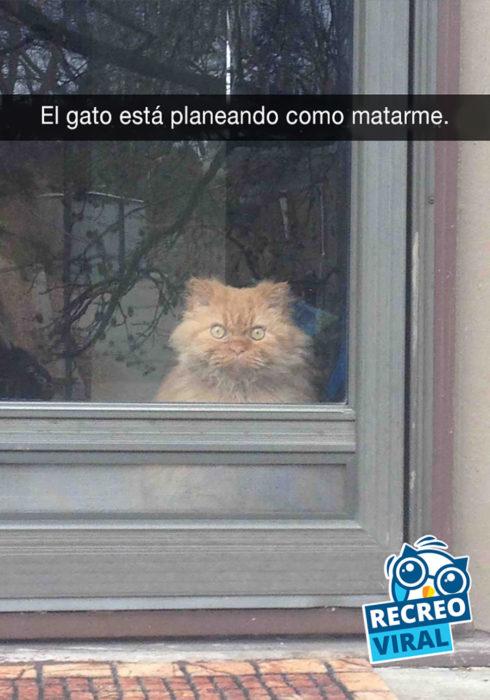 gato mirando detrás de una puerta con vidrio