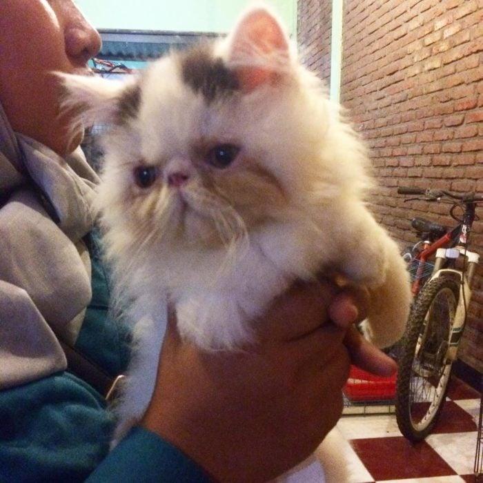 gato con expresión graciosa