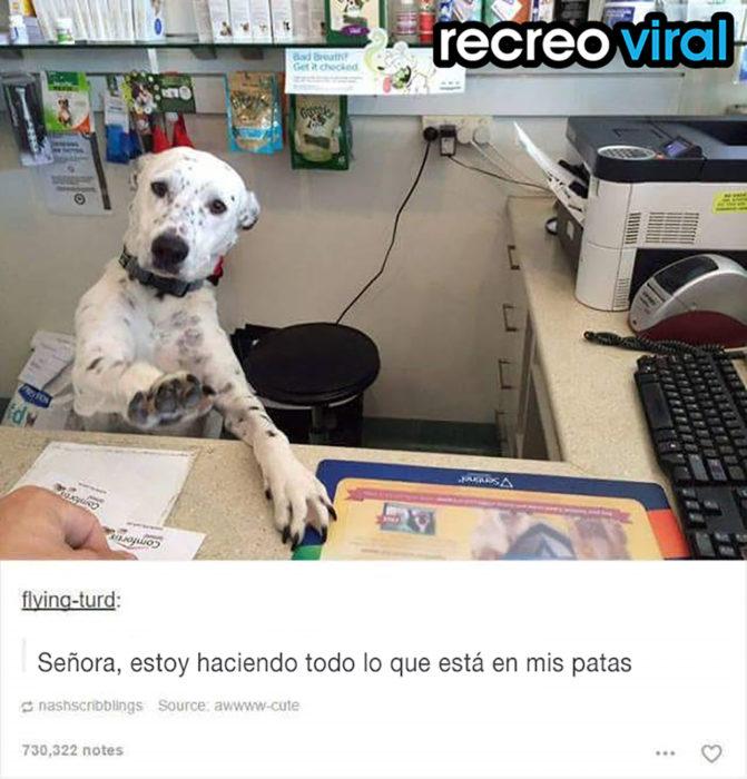 perro dálmata en un escritorio