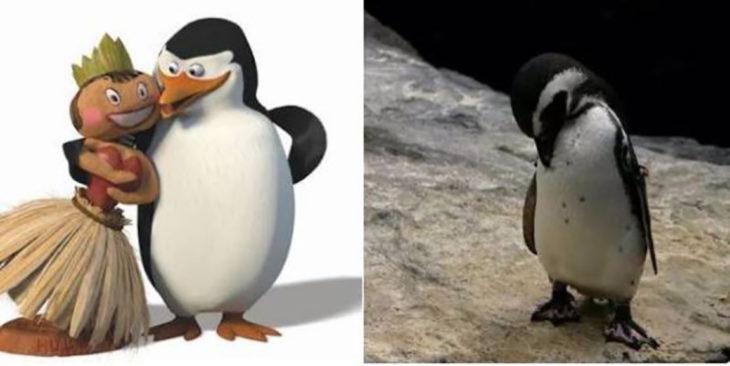 izquierda, pingüino de madagascar con muñeca, derecha, pingüino solo