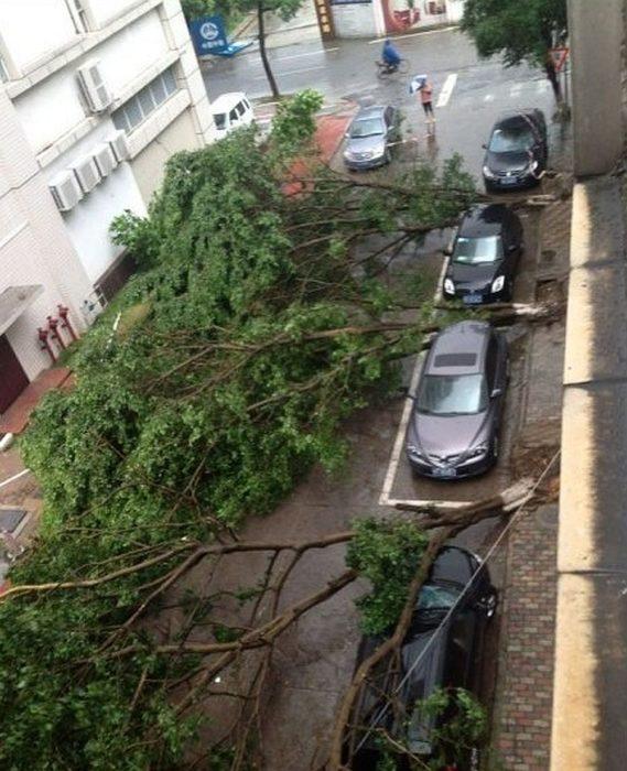 árboles tirados en estacionamiento