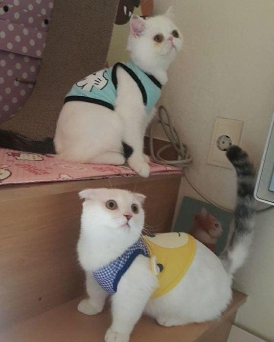 dos gatos con camisetas