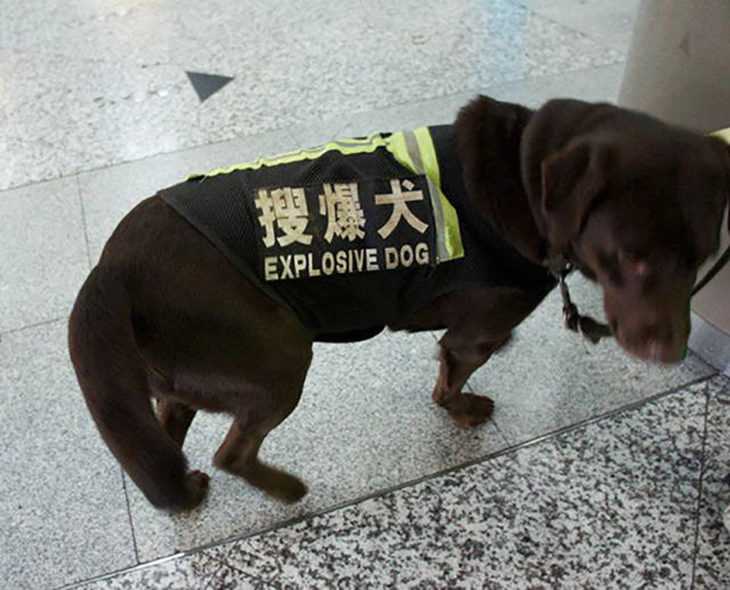 perro con chaleco fluorescente