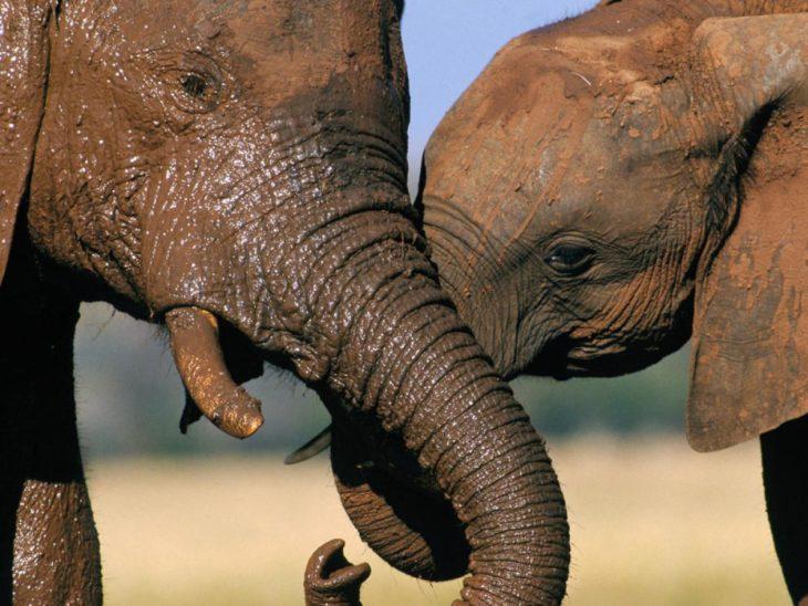mamá elefante y bebé elefante se toman de las trompas