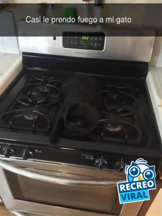 gato negro encima de una estufa