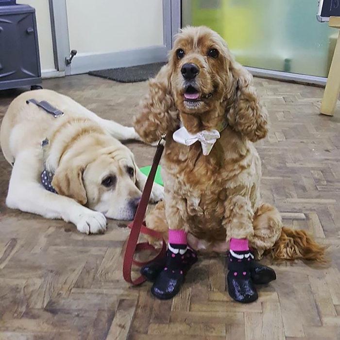 dos perritos, uno tiene zapatos