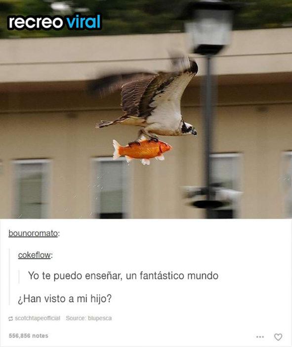 pájaro cargando un pez