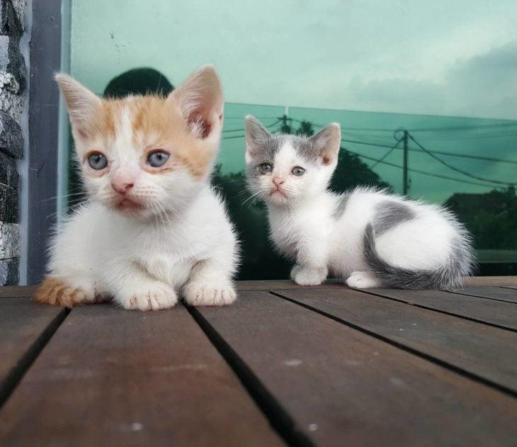 dos gatos pequeños y tiernos