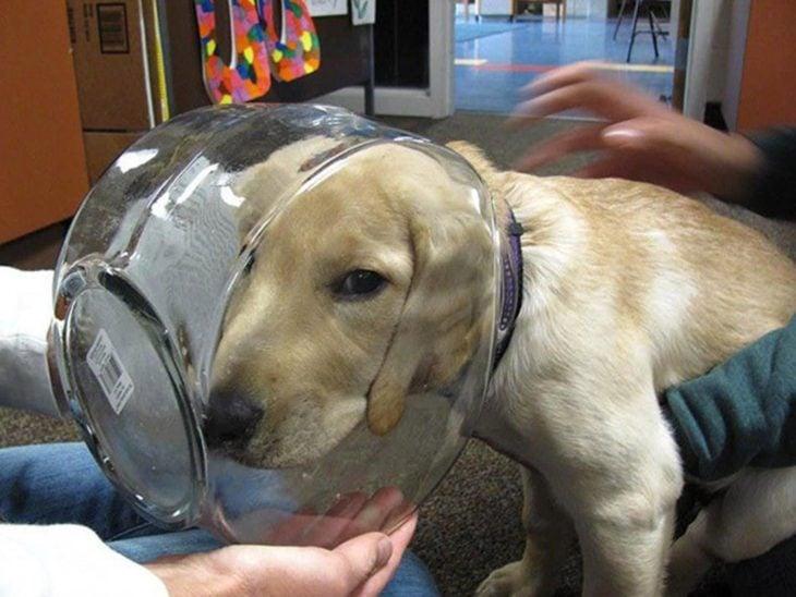 perro con la cara atorada en un frasco