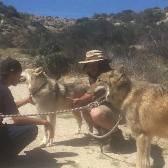Perro lobo santuario