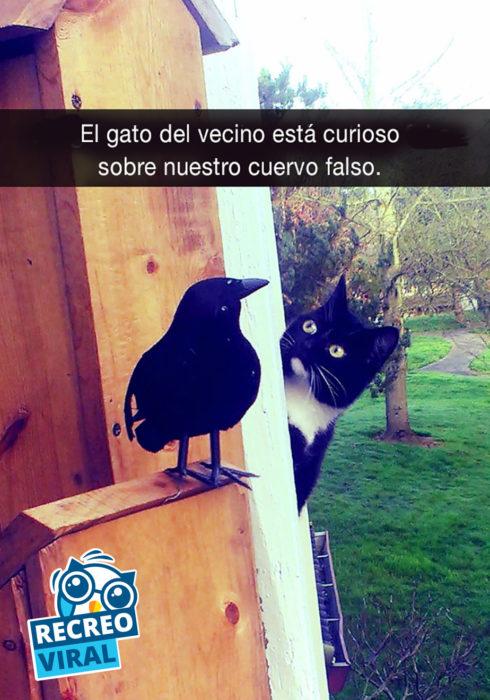 gato viendo a un cuervo
