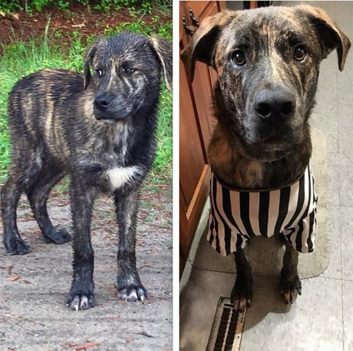 perrito sucio antes y después de ser rescatado
