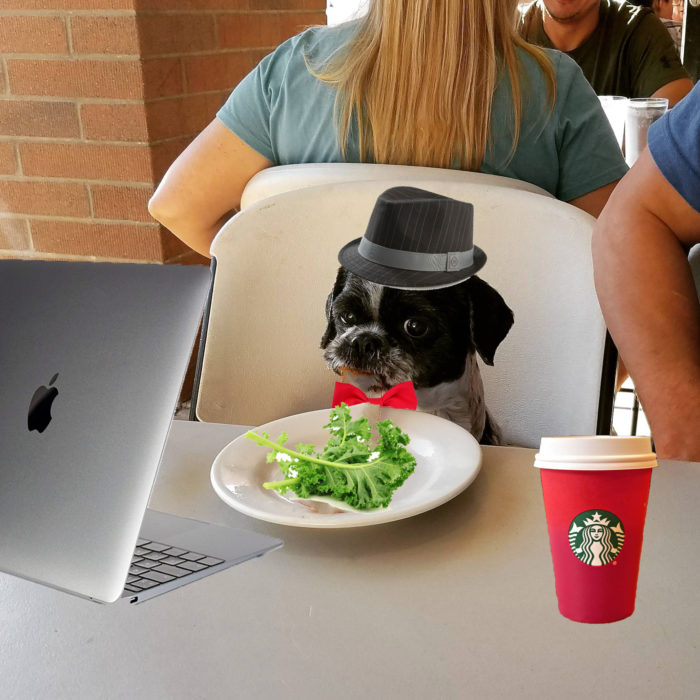 photoshop perro hipster