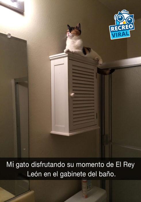 gato encima de gabinete de baño