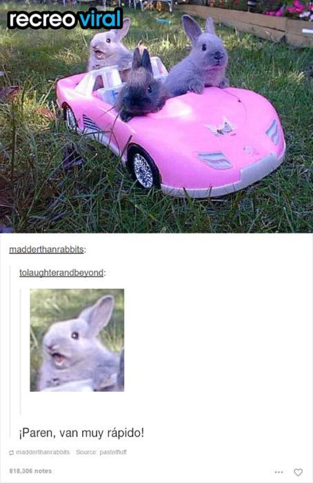 tres conejos en un carro pequeño rosa
