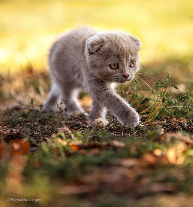 gatito pequeño sobre la tierra en otoño