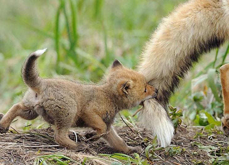 bebé zorro