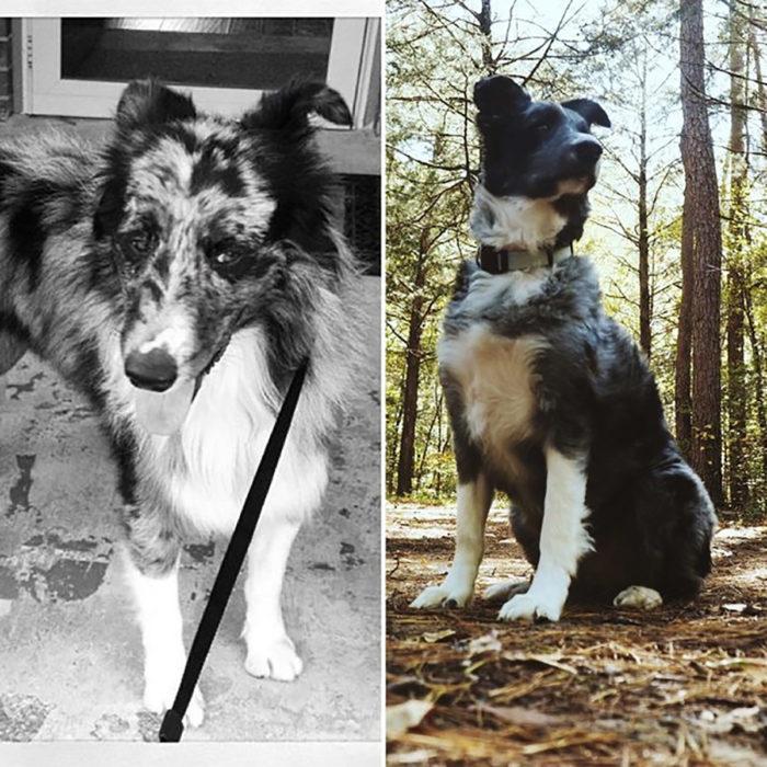 perrito con manchas antes y después de ser rescatado