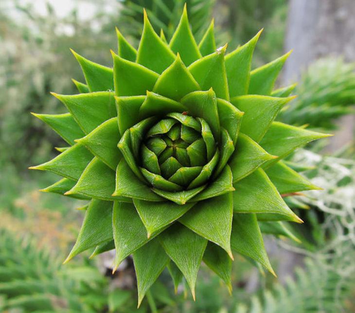 flor de cactus simétrica