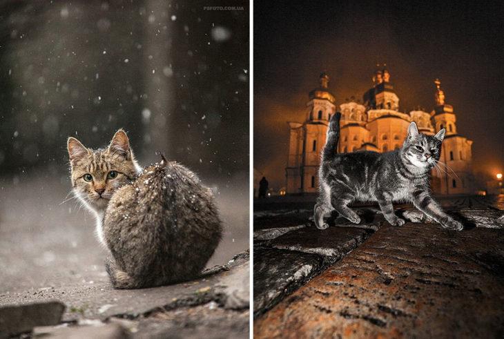 gato frente a un castillo