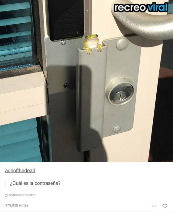 rana en cerradura de puerta