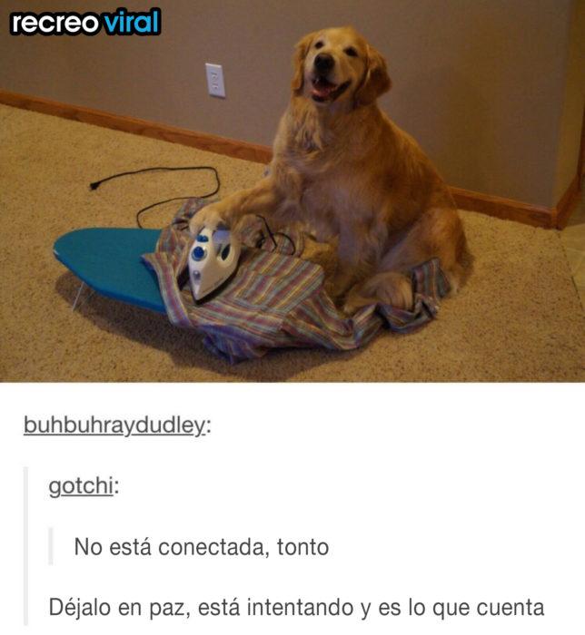 perro con plancha de ropa
