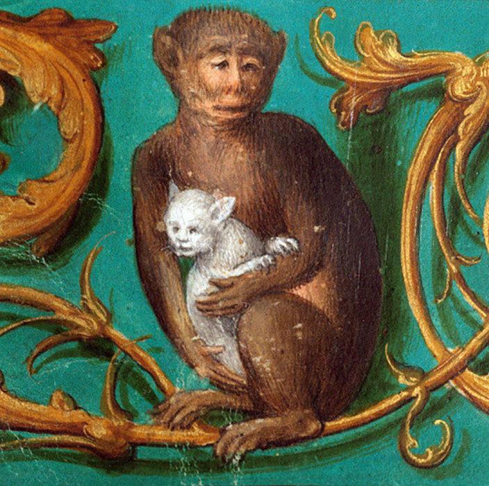 pintura de un mono cargando un gato