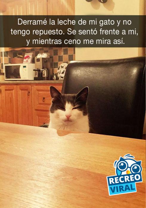 snapchar gato mirando sospechosamente