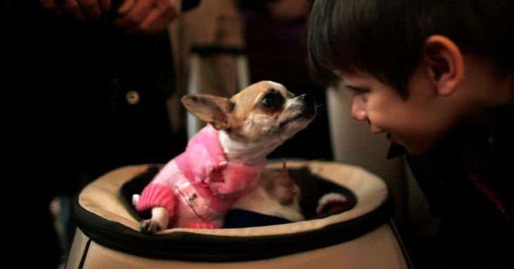 niño mirando a los ojos a un perro