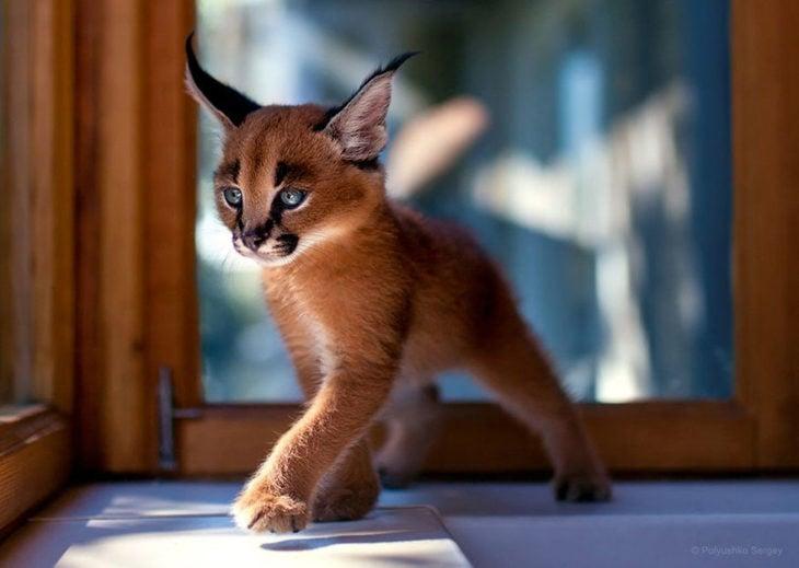 fotografía de un gatito