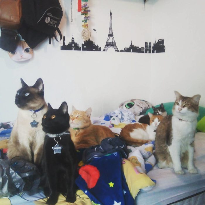 grupo de gatos en una habitación