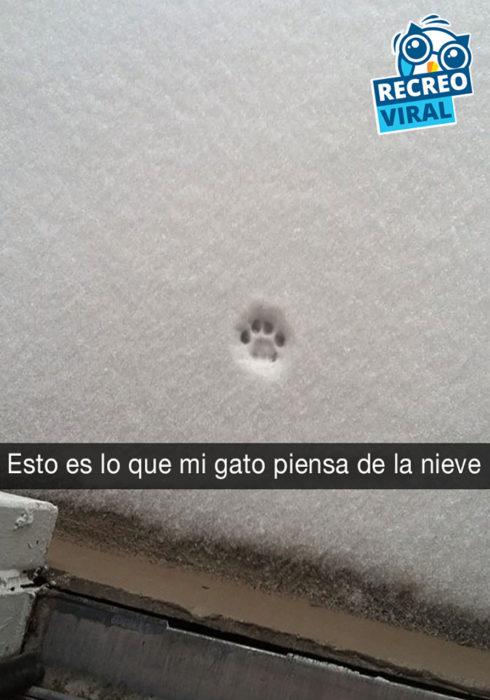 huella de gato en la nieve