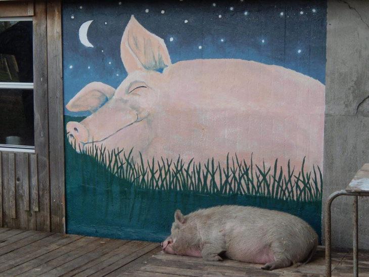pintura de cerdo y cerdo real durmiendo