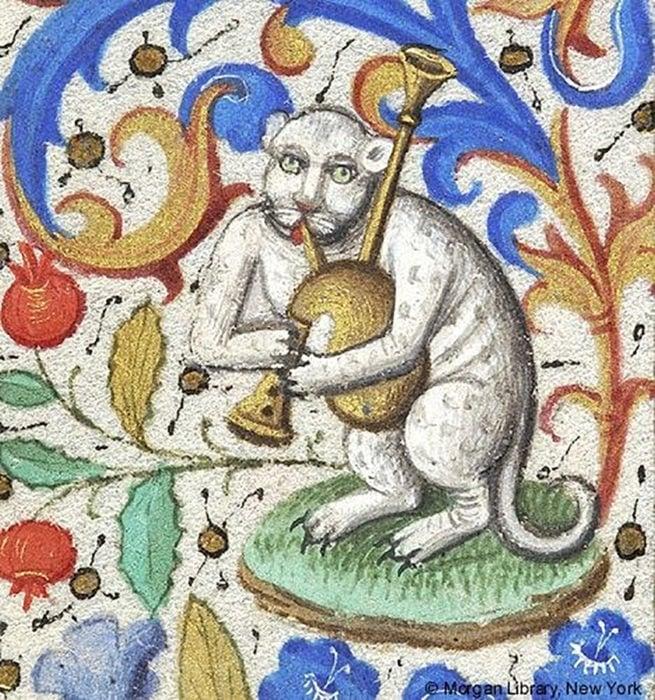 gato tocando un instrumento