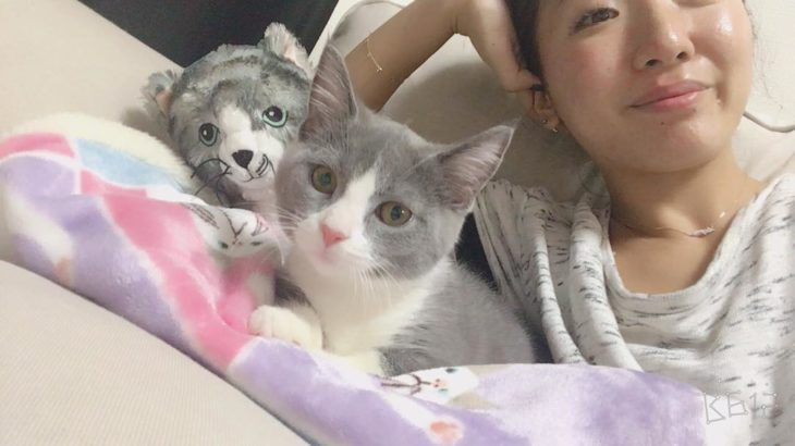 gato gris con asiática