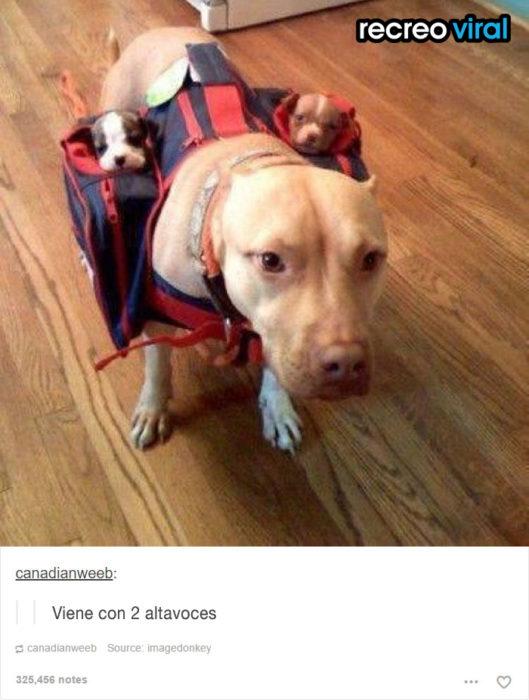 perrita cargando en mochila a sus cachorros