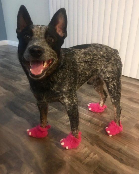 perrito con zapatos en forma de garras