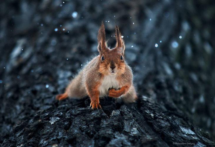 foto de ardilla en la nieve
